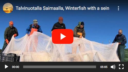 Talvinuotalla Saimaalla -video Kalakontti